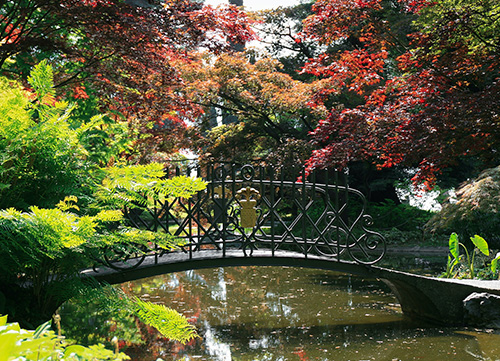 bridge over small river surrounded by trees and floral