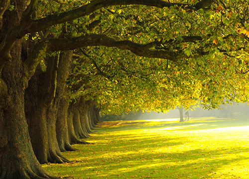photo of the trees in park at jesus green