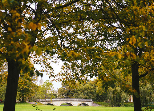 photo of trees on midsummer common with river cam in background